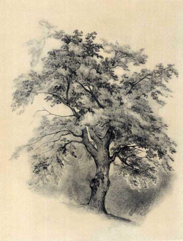 Тарас Шевченко. Дерево