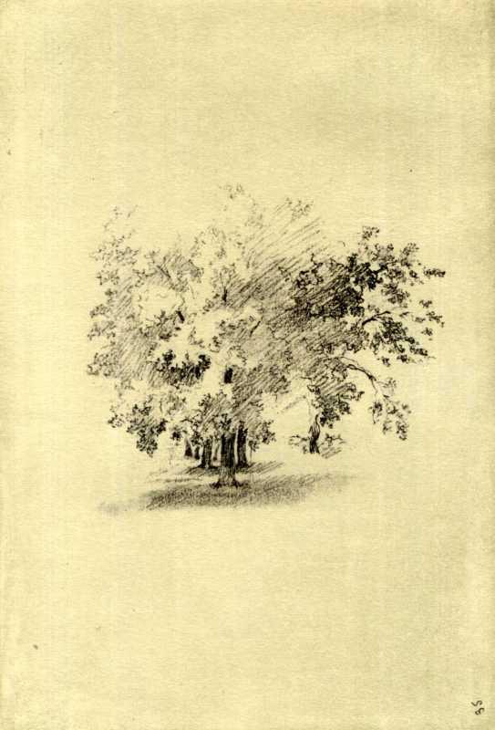 Taras Shevchenko. Trees. Sketch