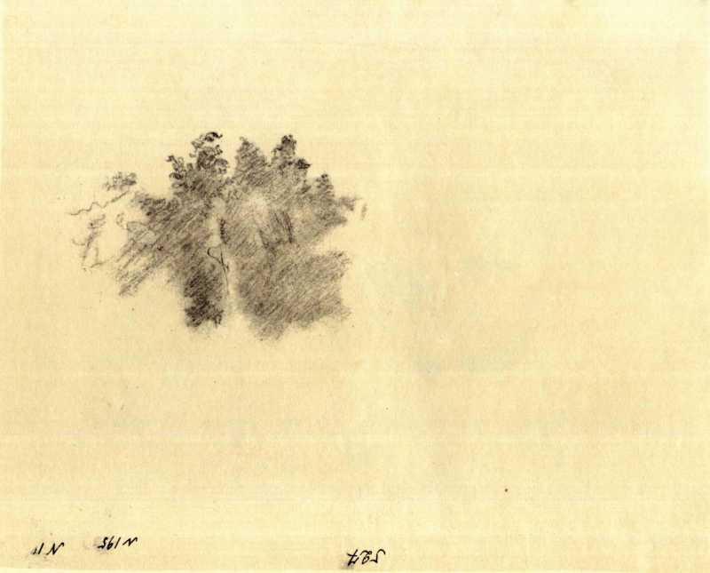 Тарас Шевченко. Дерева. Начерк