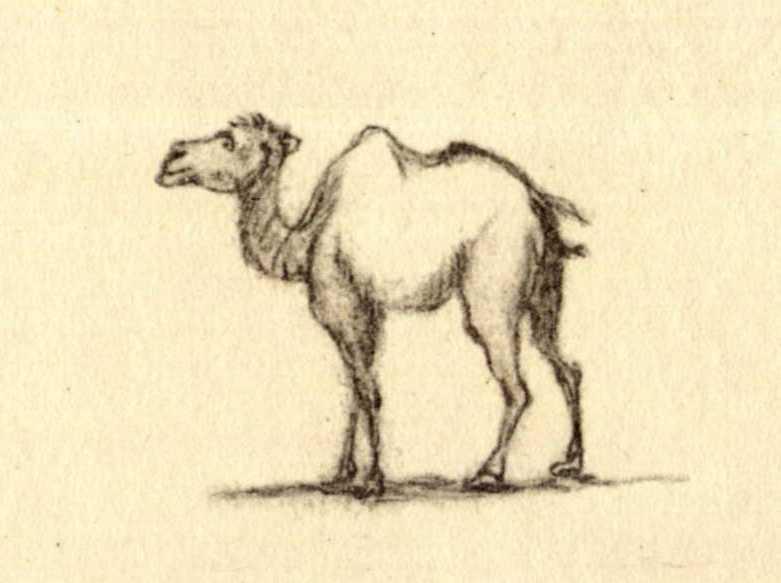 Taras Shevchenko. Camel (fol. 13 v.)