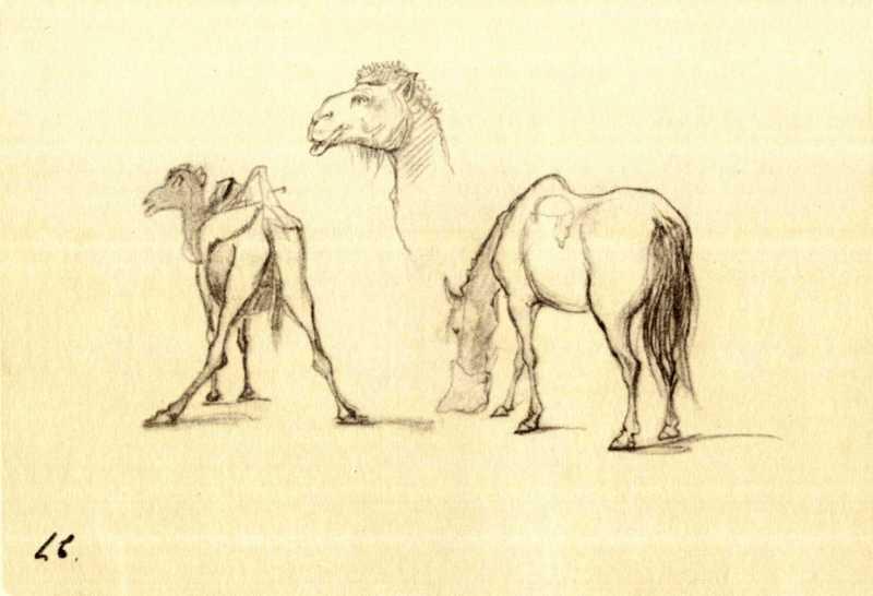 Тарас Шевченко. Верблюди. Кінь (арк. 27)