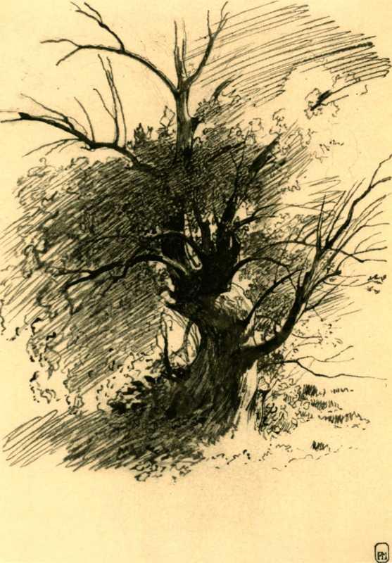 Taras Shevchenko. Tree
