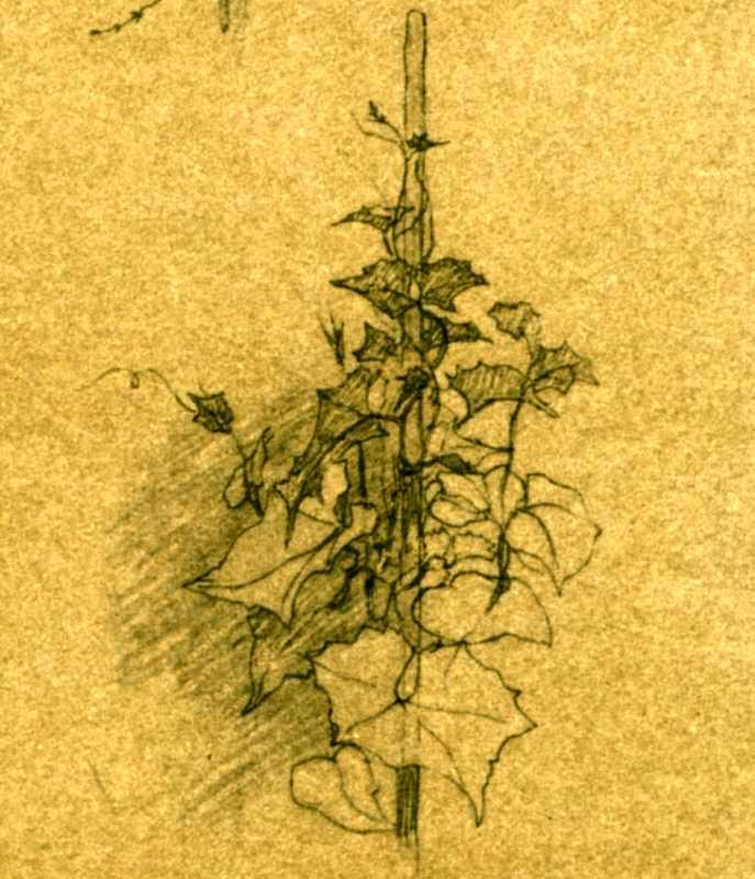 Taras Shevchenko. Plants