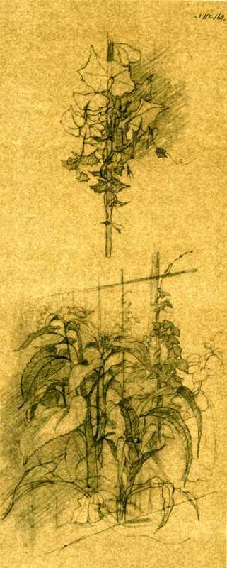Taras Shevchenko. Garden plants