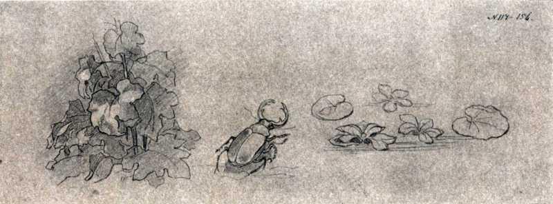 Тарас Шевченко. Жук, водяные цветы