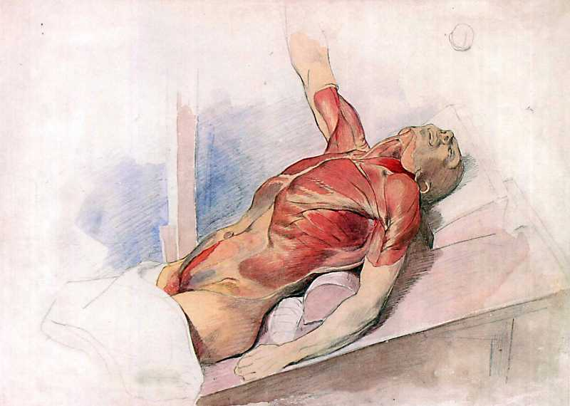 Taras Shevchenko. Anatomic drawing